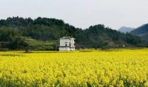 植树节丨跟斗山一起建造绿色未来