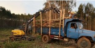 宝鼎:轮式抓木机较履带车型市场占有率明显占优