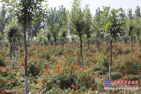 卡特彼勒基金会宣布向公益组织捐赠100万美元,在全球95个社区开展造林活动